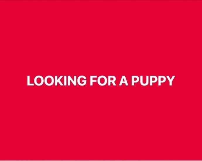 Looking for Puppy