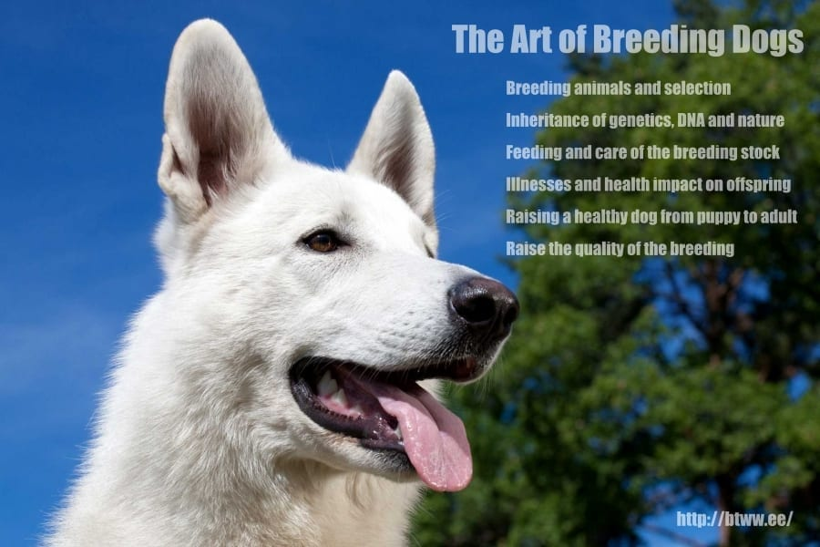 The Art of Breeding Dogs