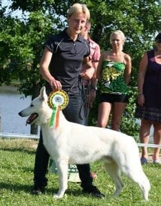 White Shepherd Born to Win White General