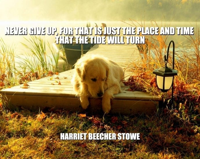 Daily Quotes: Never Give Up, For That Is Just The Place And Time That The Tide Will Turn petworldglobal.com