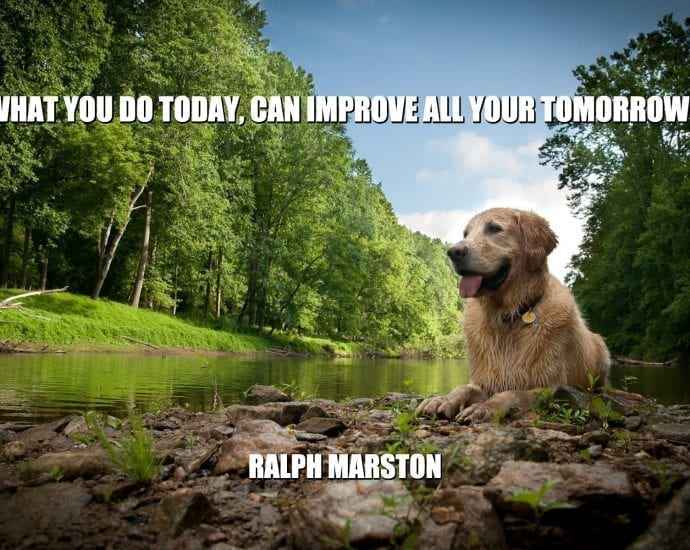 Daily Quotes: What You Do Today, Can Improve All Your Tomorrows petworldglobal.com