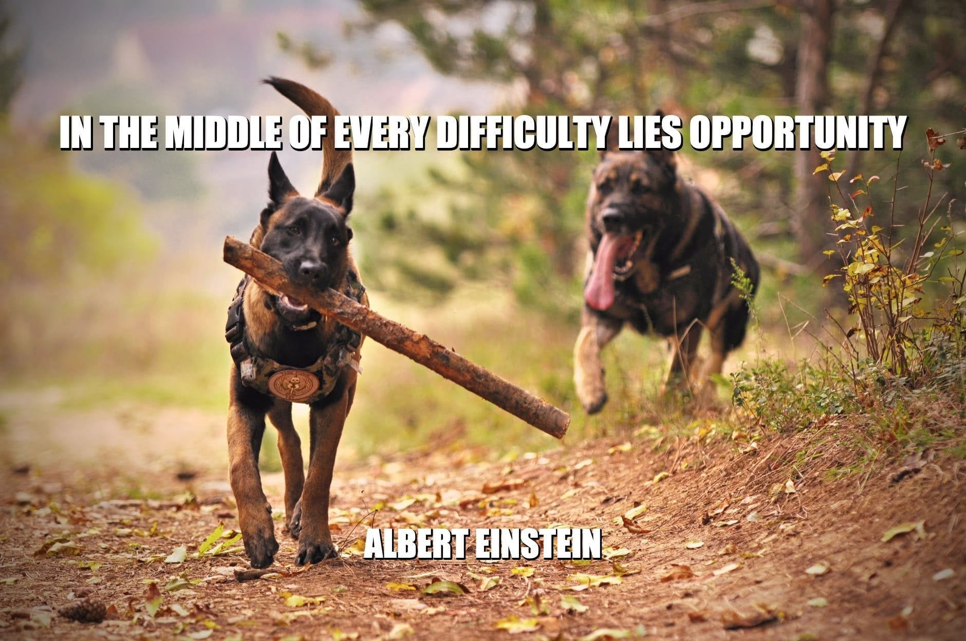 Daily Quotes: In The Middle Of Every Difficulty Lies Opportunity petworldglobal.com