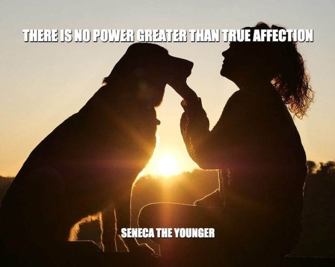 Daily Quotes: There Is No Power Greater Than True Affection petworldglobal.com