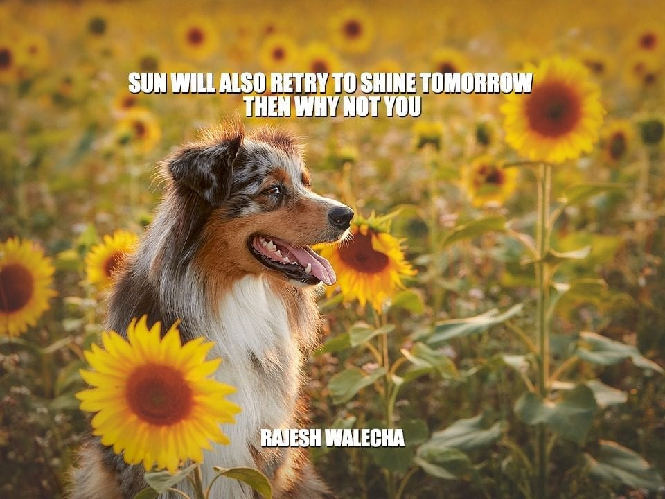 Daily Quotes: Sun Will Also Retry To Shine Tomorrow Then Why Not You petworldglobal.com