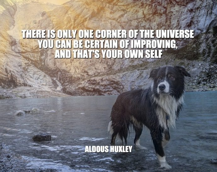 Daily Quotes: There Is Only One Corner Of The Universe You Can Be Certain Of Improving, And That's Your Own Self petworldglobal.com