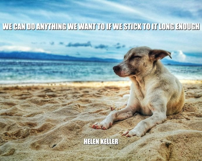 Daily Quotes: We Can Do Anything We Want To If We Stick To It Long Enough petworldglobal.com