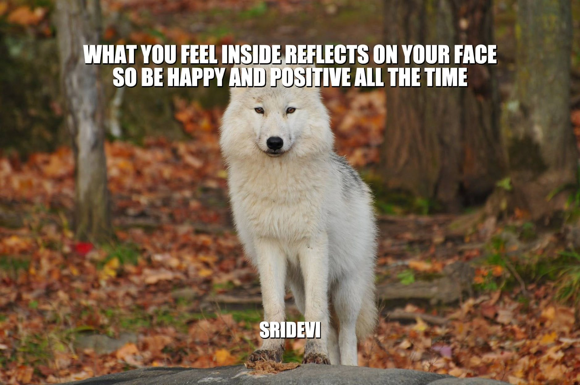Daily Quotes: What You Feel Inside Reflects On Your Face. So Be Happy And Positive All The Time petworldglobal.com