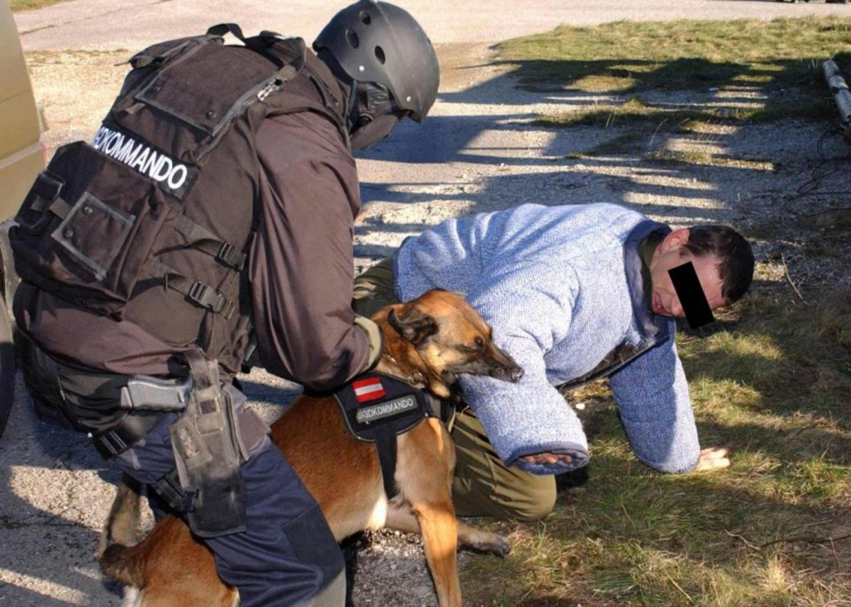 Two Belgian Malinois Military Dogs Killed a Man in Austrian Armed Forces
