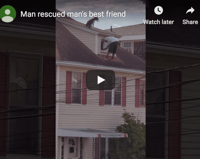 Dog on Roof Rescued by Man in Rhode Island