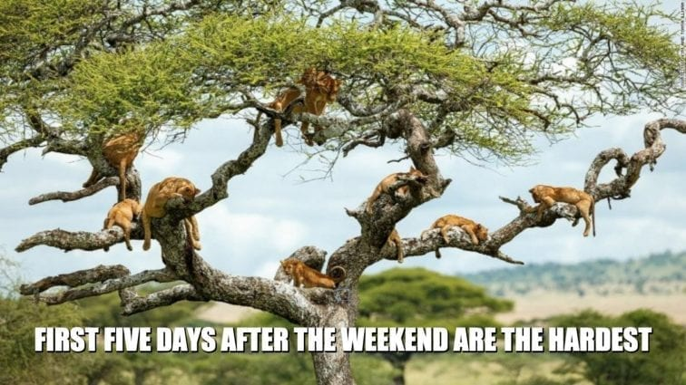 First Five Days After the Weekend are the Hardest