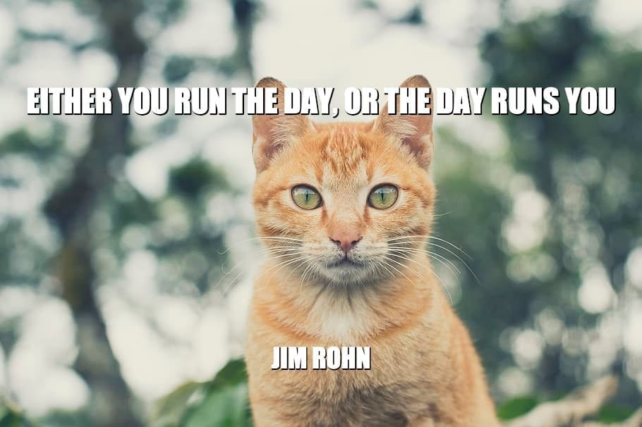 Daily Quotes: Either You Run The Day, Or The Day Runs You petworldglobal.com