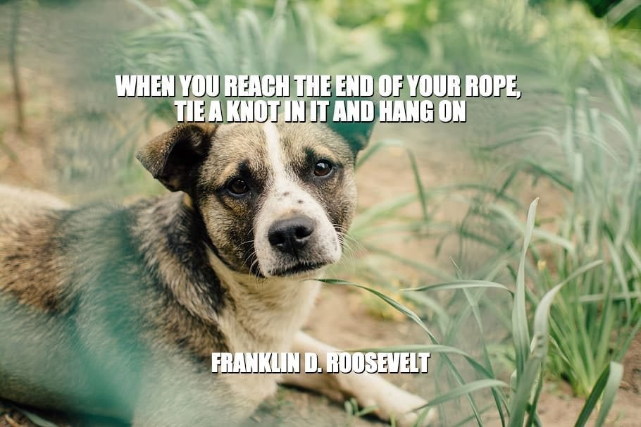 Daily Quotes: When You Reach The End Of Your Rope, Tie A Knot In It And Hang On petworldglobal.com