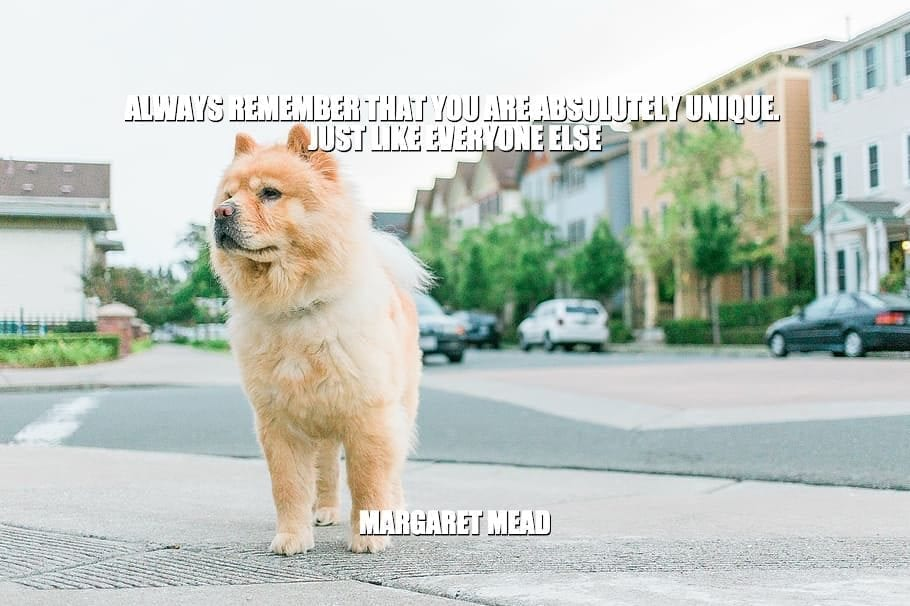 Daily Quotes: Always Remember That You Are Absolutely Unique. Just Like Everyone Else petworldglobal.com