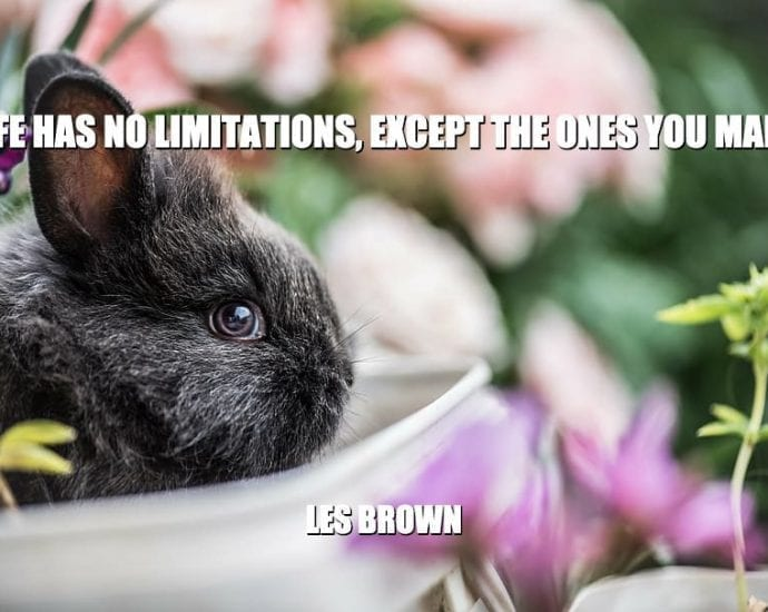 Daily Quotes: Life Has No Limitations, Except The Ones You Make petworldglobal.com