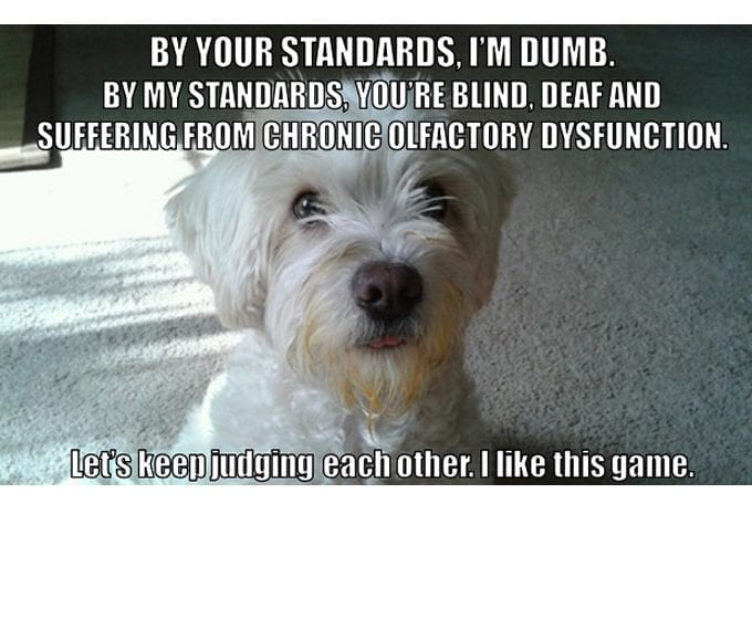 So Funny! Do Not Underestimate The Dog petworldglobal.com