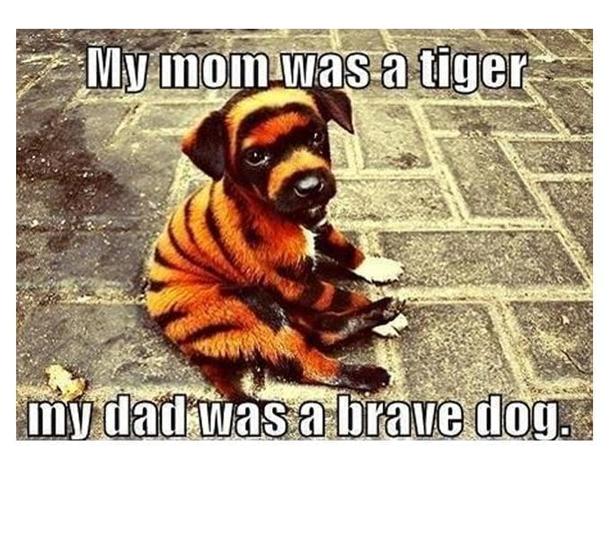 Adorable! And A Very Brave Dog Indeed..Lol petworldglobal.com