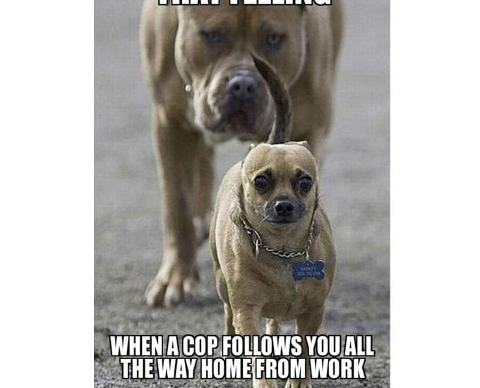 When A Cop Is Behind You. Do Not Make A Mistake! petworldglobal.com