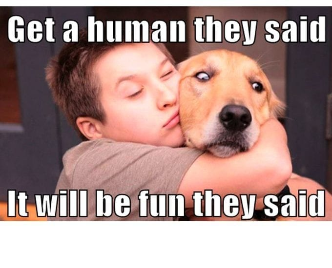 Funny! What If Dogs Are Actually The Ones Choosing Us? petworldglobal.com