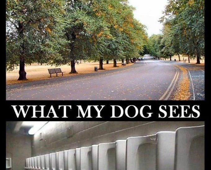 Funny Comparison! What I See And What My Dog Sees petworldglobal.com