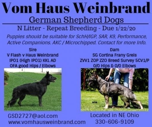 Vom Haus Weinbrand Working Line German Shepherd Puppies Barberton - German Shepherd Puppies in OHIO