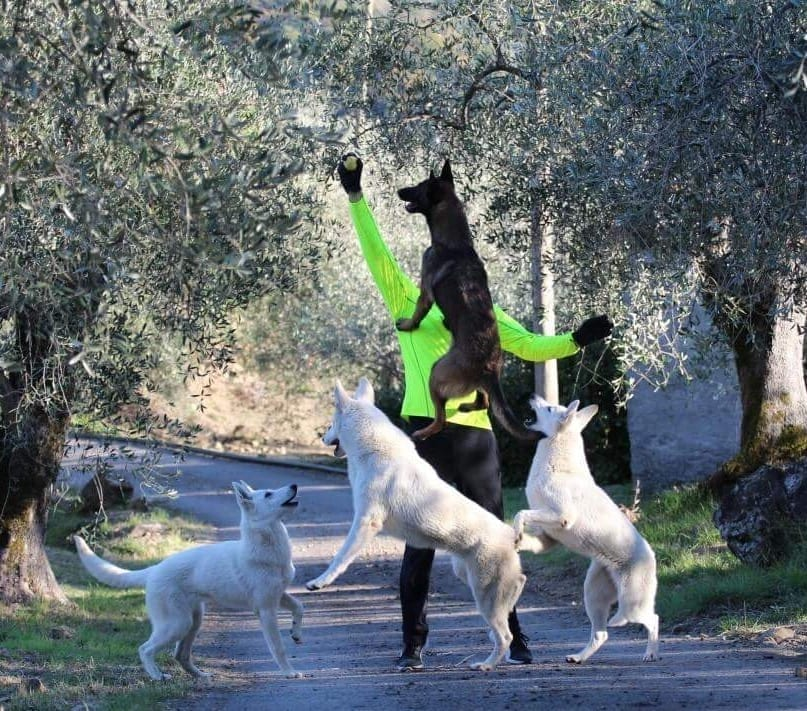 Sport and Dogs - Petworld Global