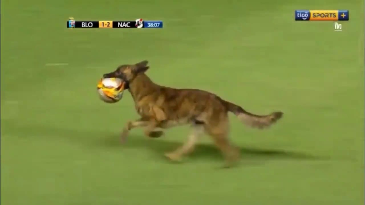 Is the Police Dog Better Player then Messi and Ronaldo? petworldglobal.com