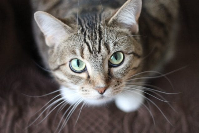 How to put your cat on a safe and healthy diet? petworldglobal.com
