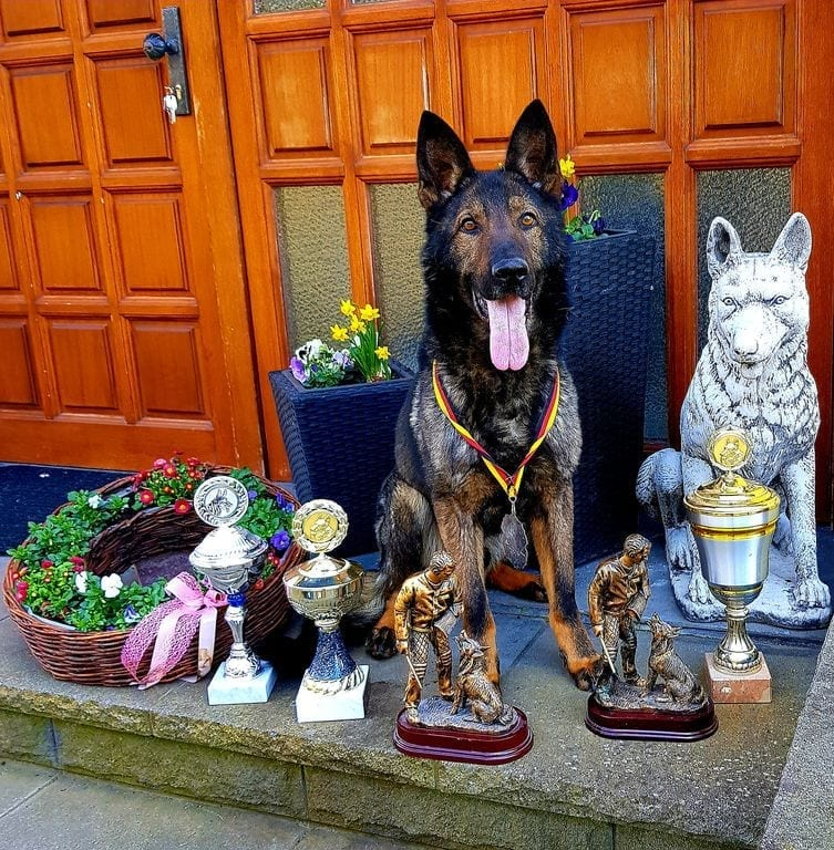 EXCLUSIVE FAMILY PROTECTION DOG IPO3 in GERMANY petworldglobal.com