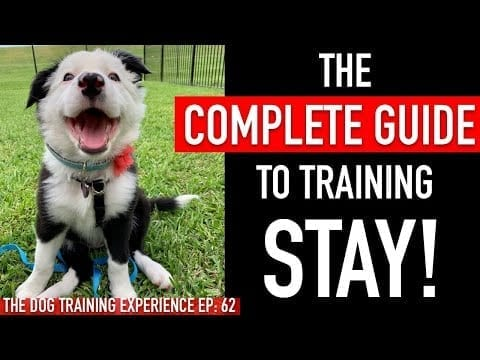 1 Year of Training My Dog Stay in 1 Video petworldglobal.com