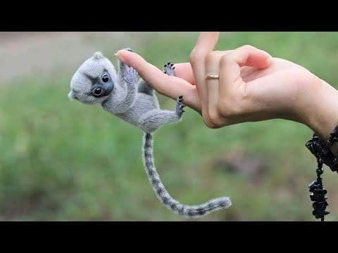 10 Cutest Exotic Animals You Can Own as Pets petworldglobal.com