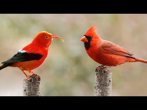 10 Most Beautiful Red Birds in the World petworldglobal.com