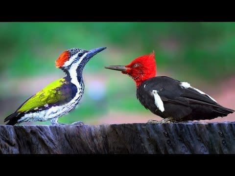 10 Most Beautiful Woodpeckers in the World petworldglobal.com