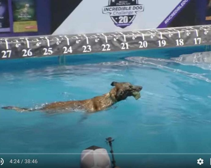 Sport and Dogs Full Diving Dog Competition 2017