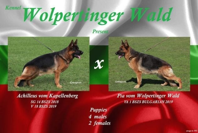 V18 Achilleus v. Kapellenberg Puppies for Sale in Bulgaria petworldglobal.com