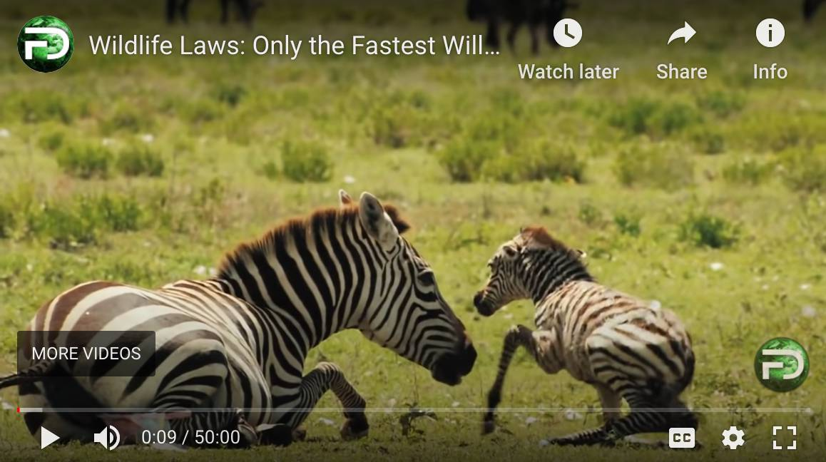 Born to Run: Wildlife Laws - Only the Fastest Will Survive