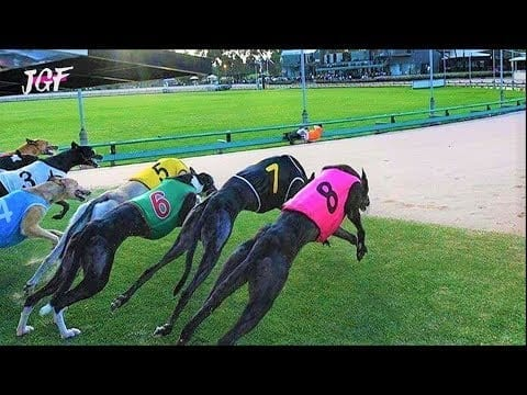 American greyhound racing - Track race petworldglobal.com