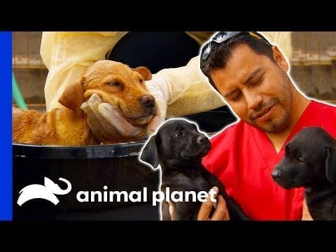 Hector Rescues Puppies Left Homeless After Flood   Dr. Jeff: Rocky Mountain Vet petworldglobal.com