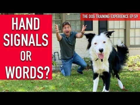 How to Train Your Dog to HAND SIGNALS and WORDS! petworldglobal.com