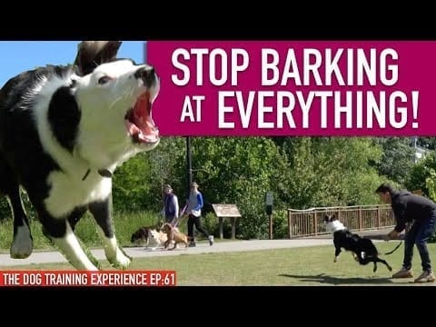 How To Train Your Dog To STOP BARKING at EVERYTHING That MOVES! Continued... petworldglobal.com