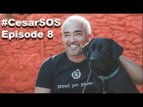 My BEST Advice On A Doggy Couch Potato petworldglobal.com