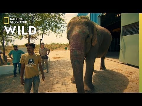 Operation Elephant | Jungle Animal Rescue petworldglobal.com