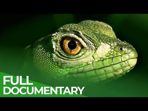 Tropical Natural Paradise: Panama & Costa Rica | Free Documentary Nature petworldglobal.com