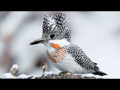 10 Most Beautiful Kingfishers in the World petworldglobal.com