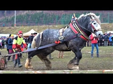 10 Most Powerful Horses in the World petworldglobal.com