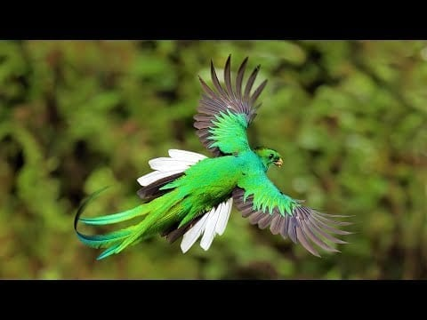 6 Most Beautiful Quetzals in the World petworldglobal.com