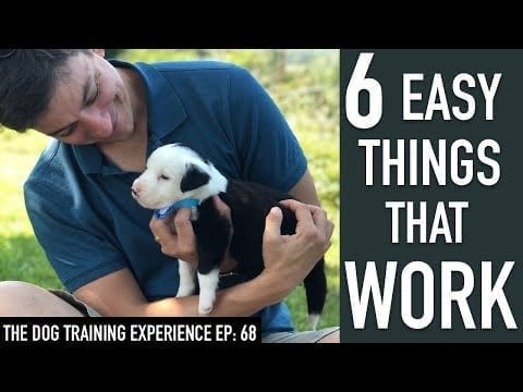 6 Things That Will Make it EASY to Train Your Dog! petworldglobal.com