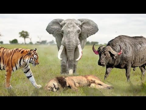 7 Animals That Can Kill a Lion Easily petworldglobal.com
