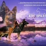 German Shepherd Puppies in Germany for Sale - vom Haus Dupont petworldglobal.com
