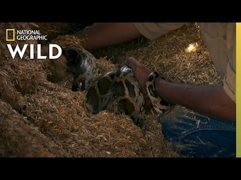 A Snake in a Hay Stack | Jungle Animal Rescue petworldglobal.com