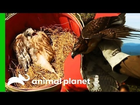 Amazing Bird Rescues And Releases   North Woods Law   Compilation petworldglobal.com